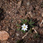 Refuge du Molkenrain amis de la nature 087