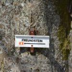 Refuge du Molkenrain amis de la nature freundstein 11
